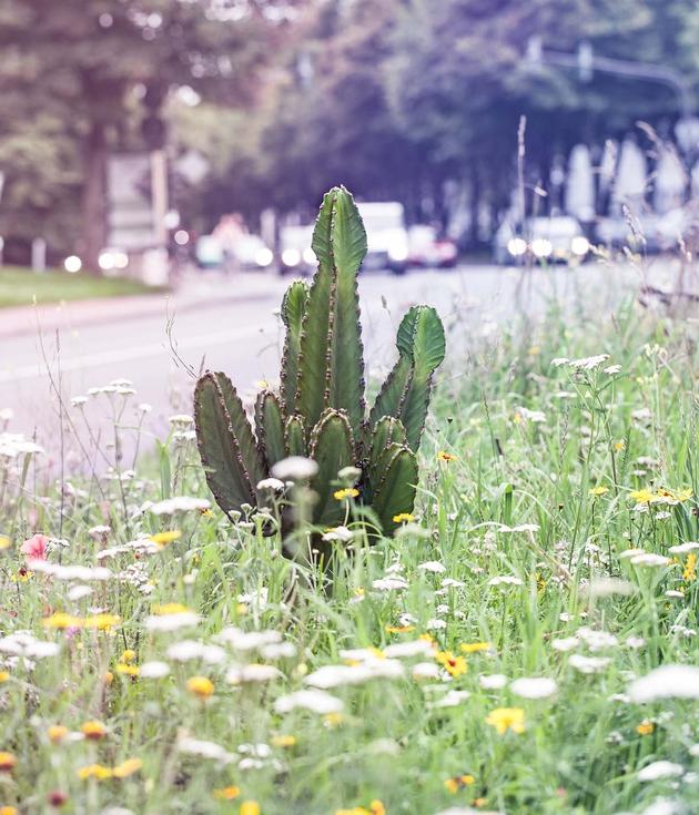 Migration | Fremde Pflanzen Migration | Alien plants